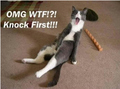 OMG Knock First - animal-humor photo