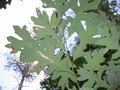 Leafy Undersides - photography photo