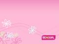 粉, 粉色 壁纸
