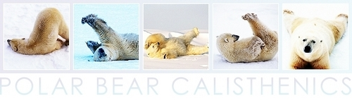 Polar भालू Calisthenics Banner