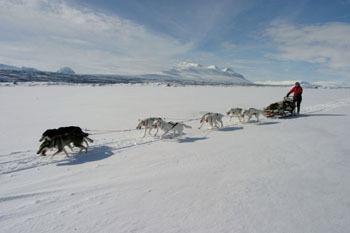 Sarek, Laponia - winter