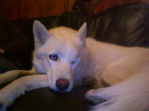Sitka (One-eyed)