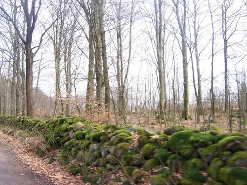 Skåne Forest