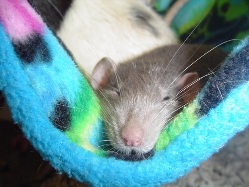 Sleeping Josef