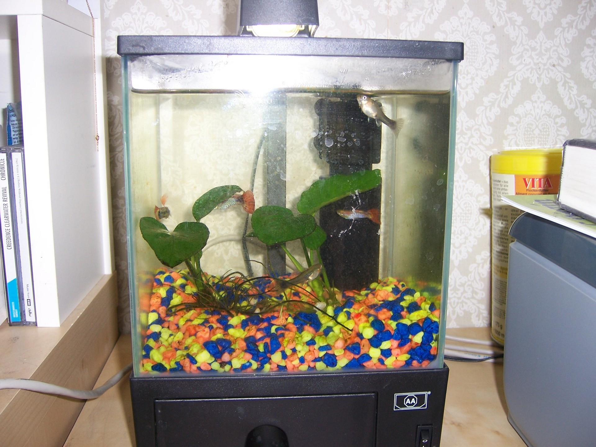 Small Tank - Fish Photo (1145908) - Fanpop