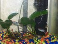 Small Tank - fish photo