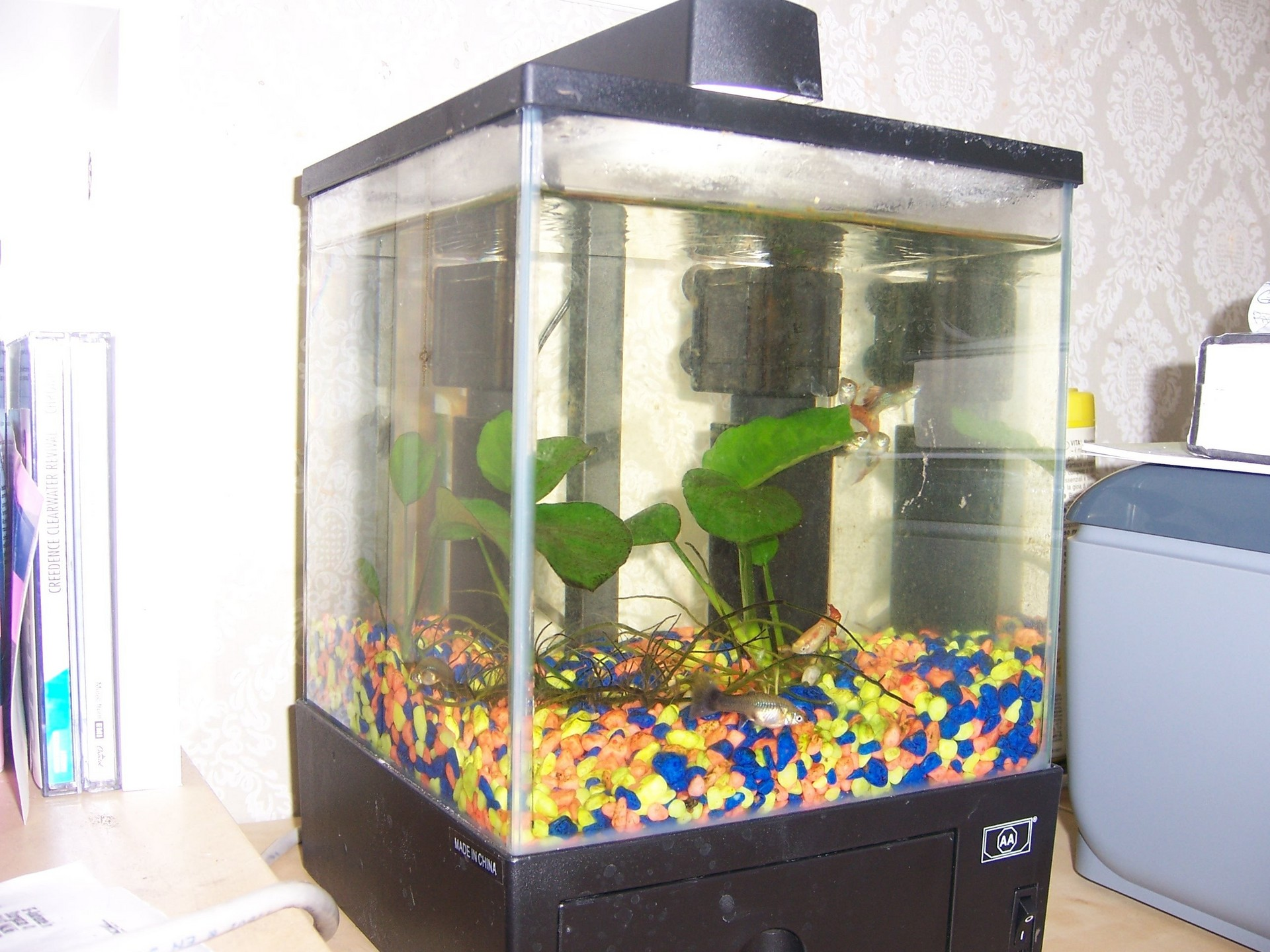 Small fish tank for Good fish for small tanks