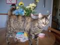cats - Spring Kitty wallpaper