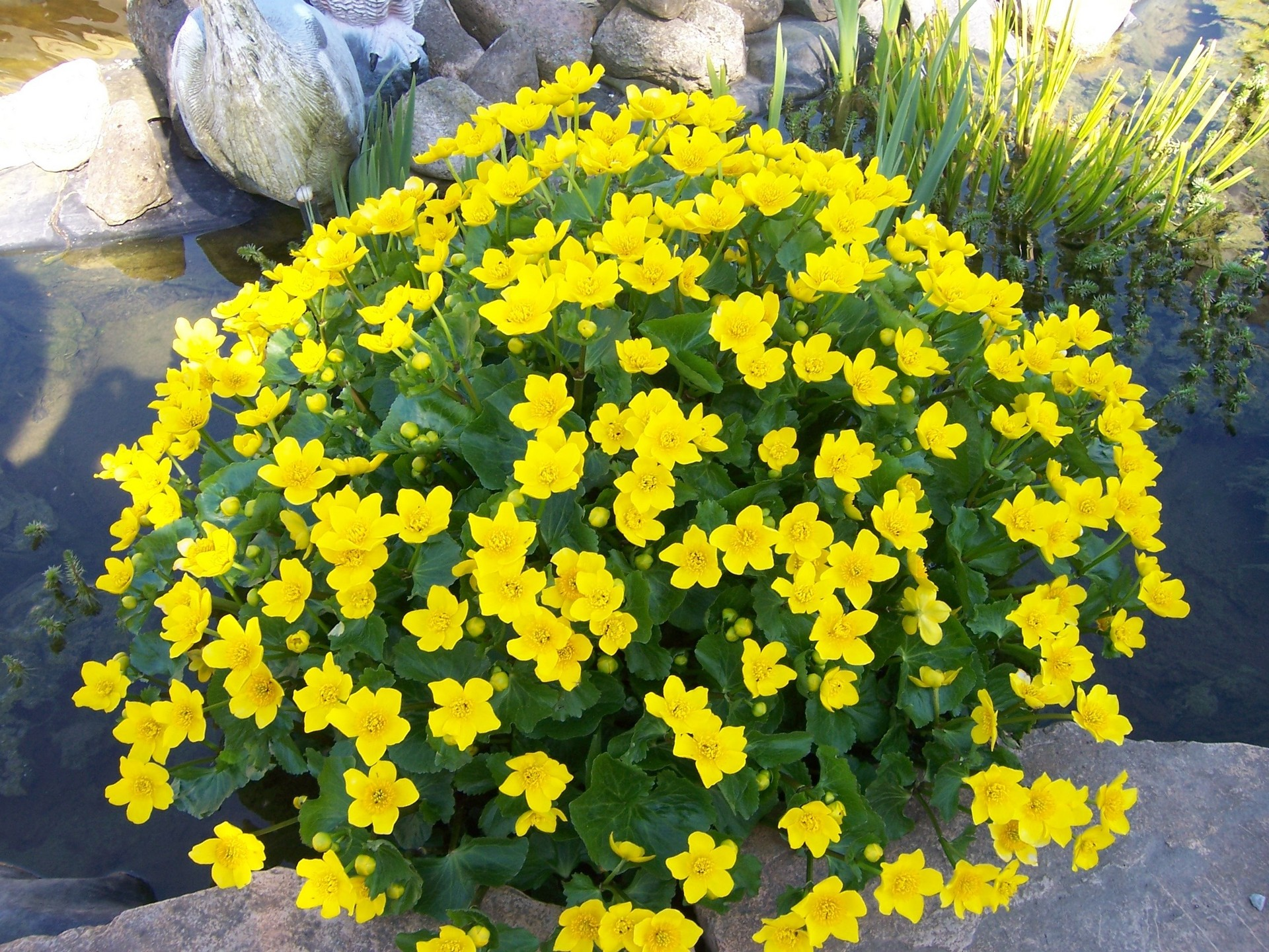 Spring Flowers Gardening Wallpaper 1145566 Fanpop