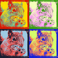 Squirrel Pop Art