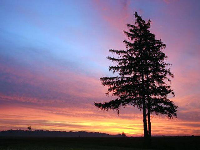 Sunset33
