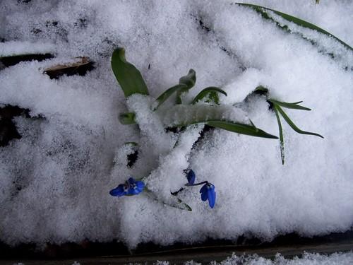 Sweden 2008 March 26