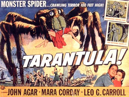 một giống nhện, tarantula