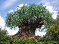 Tree of Life - walt-disney-world photo