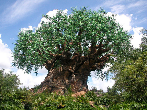 Walt Disney World wallpaper with a live oak, a mahogany, and a beech called Tree of Life
