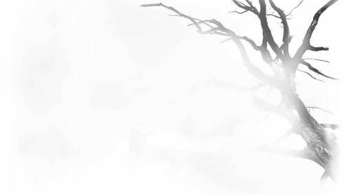 Twilight Movie Website