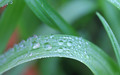Water drops - water photo