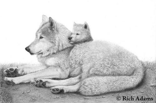 White serigala