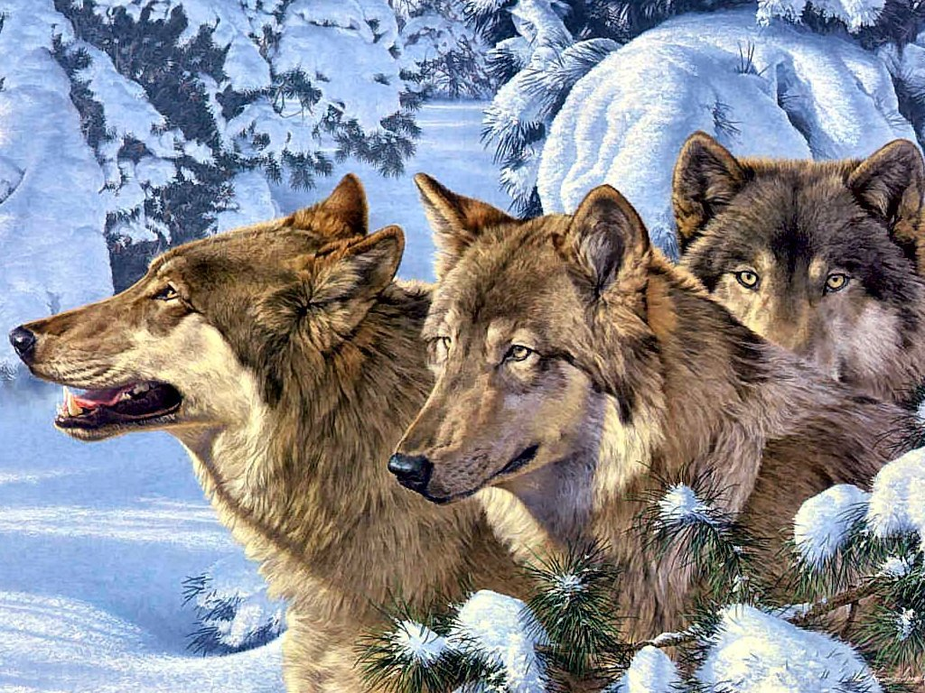 Wolves winter wolves