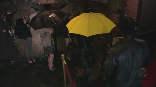 Yellow Umbrella-Not Ted