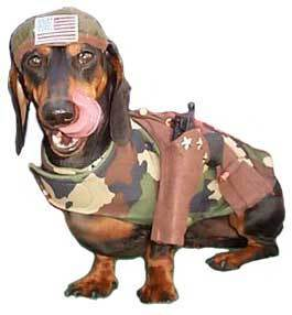 Dogs wallpaper titled army dog