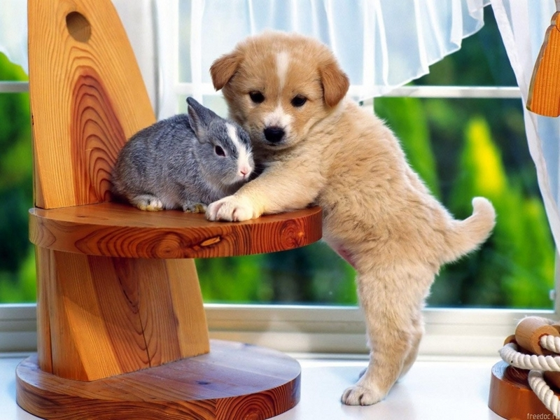 doggy wallpapers - Dogs