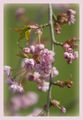 flower - photography photo