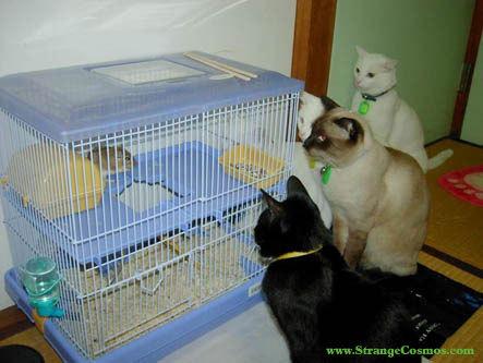 Cat & topo, mouse