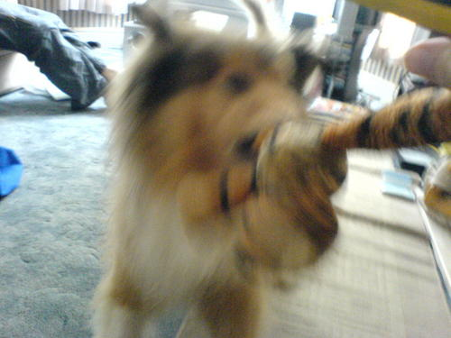 mizzlaurie's dog!
