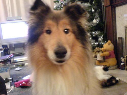 mizzlaurie's dog