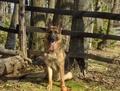 my dog - zeus