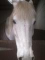 my horse cassie