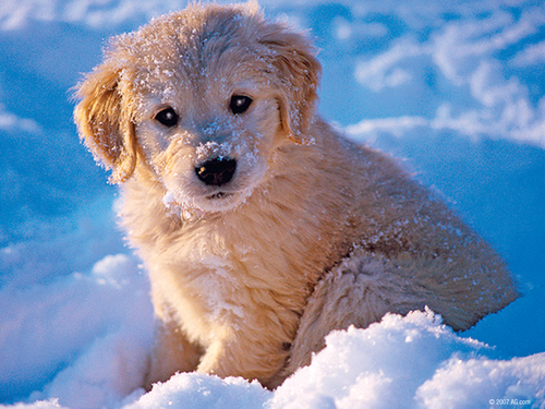soo cute <3