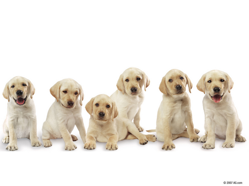 wallpaper cute dogs. soo cute lt;3 - Dogs Wallpaper