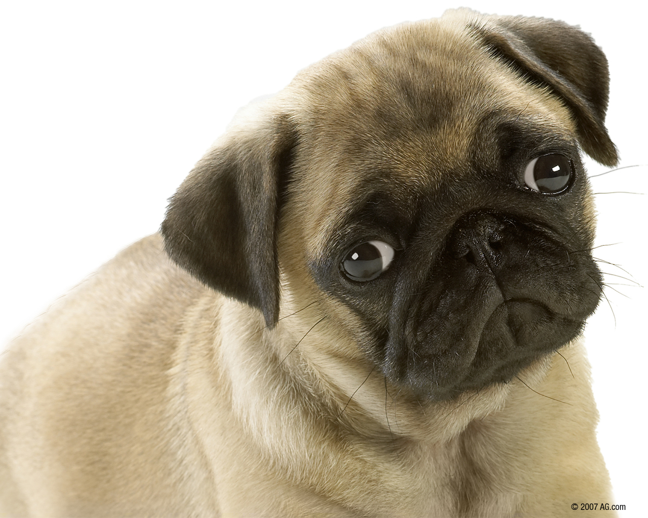 soo cute 3 dogs 1120747 1280 1024