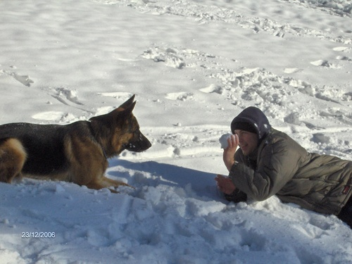 German Shepherds پیپر وال probably containing a snowbank, an igloo, and a german shepherd entitled zeus