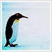 Penguins Icons - penguins icon