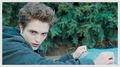 TWILIGHT - edward-and-bella photo
