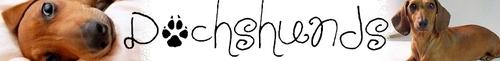 Dachshunds banner