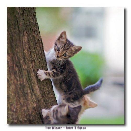 Kitty climbing a albero