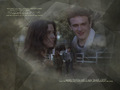 Nick & Lindsay - jason-segel wallpaper