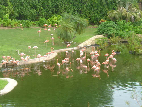 rose flamingos