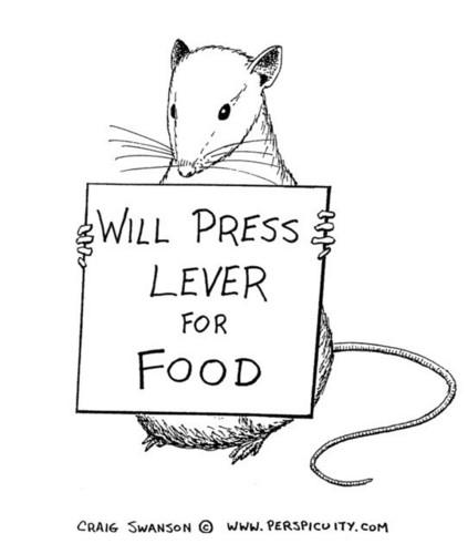 Skinner Rat