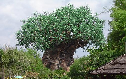 树 of Life