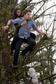 Twilight Set - twilight-series photo