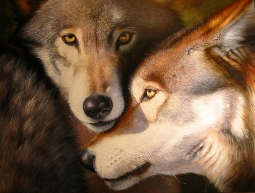 Wolves wallpaper containing a timber wolf entitled Wolf Couple