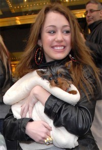 miley's puppy