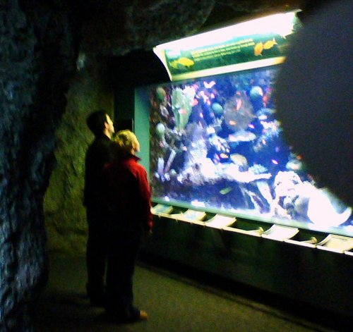 Hayden and Milo at the Aquarium of the Pacific in Long সৈকত