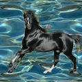 Black Stallion Run