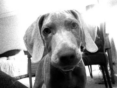Brendon's Dog Ernie